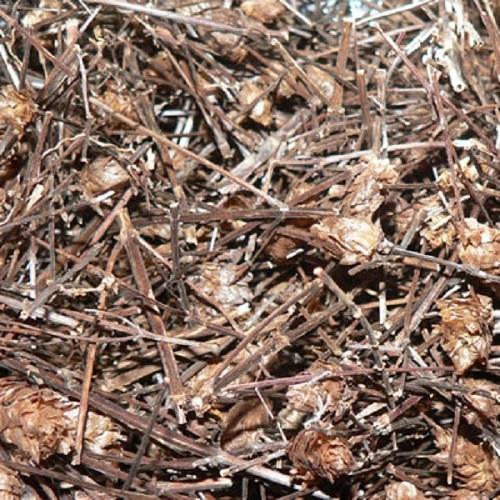 Công dụng của cây nhân trần